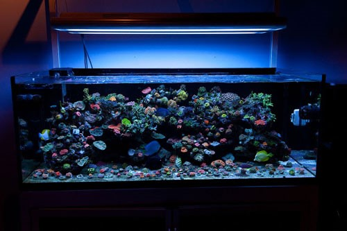 LED Aquarium